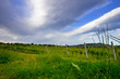 vineyard in spring with cloudy sky