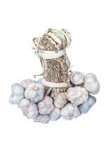 bunch of garlics