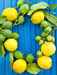 Frische Bio Zitronen