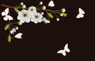 white spring tree blossoming branch and butterflies