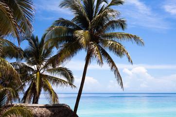 Kuba Strandhütte unter Palmen