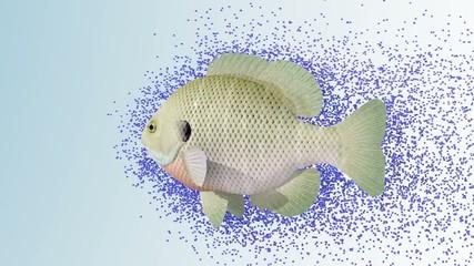 Pesce emitter