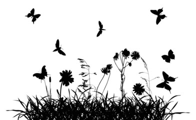 butterflies above chamomile flowers in grass silhouettes