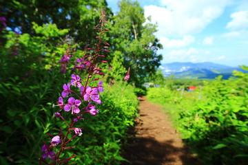 ピンクの花が咲くハイキングロード