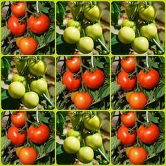 Jeu des croix et des ronds avec des tomates
