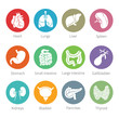 Vector icon set of human internal organs in flat style - 68246815