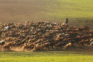 rushing horses