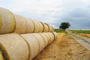 Strohballen nach der Ernte von Getreide