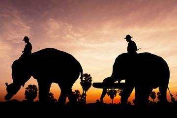 Elephant work on twilight time