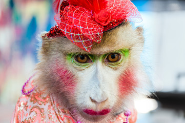 Portrait of dressed monkey posing with turists in Thailand