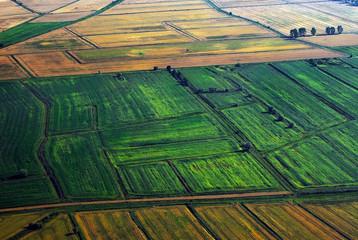 Fields birds view