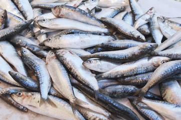Freshness raw sardines