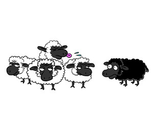 Black sheep and group of white sheep