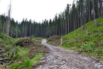 szlak na Kasprowy Wierch - Tatry