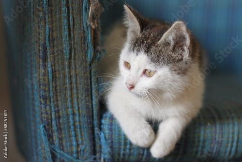 canvas print picture Katzenbaby