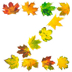 Letter Z composed of autumn maple leafs