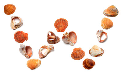 Letter W composed of seashells