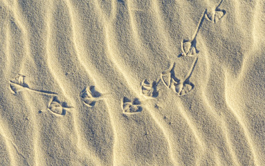 background of sand ripples at the beach with prints of birds f