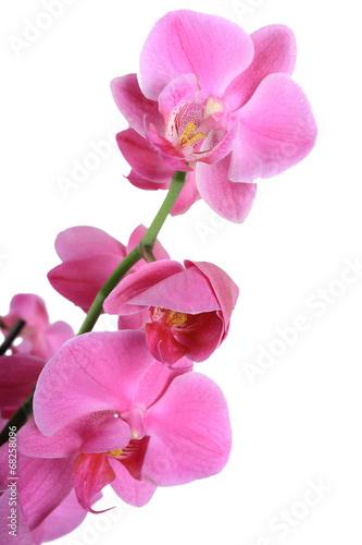 canvas print picture Orchidée violet