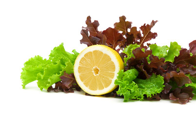 fresh lettuce and lemon on a white background