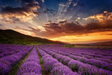 Stunning landscape with lavender field at sunrise - 68260251
