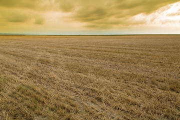 Wheat stubble field over yellow cloudscape