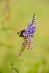 delicate purple flower