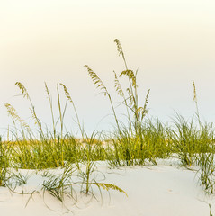 Calm beach with dunes and green grass in sunset