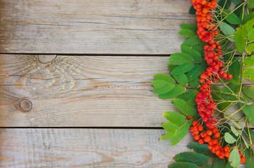 Red rowan berries on the old wood