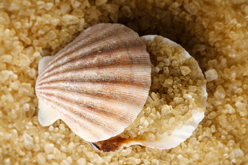 Sea salt and seashell,  close up