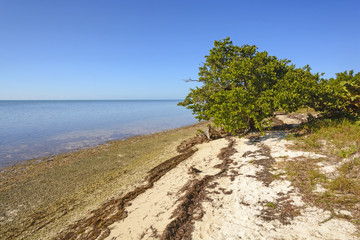 Mangrove and Beach at Low Tide