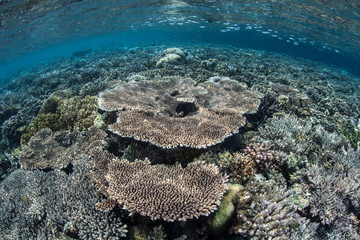 Robust Coral Reef