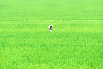 農業と人間