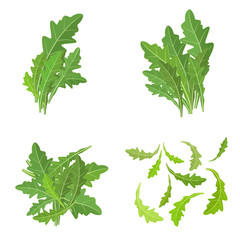 bunch fresh arugula herb isolated set