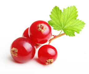 Branch red currants berry