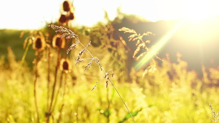 Prairie Grass and Spider Web and Sun