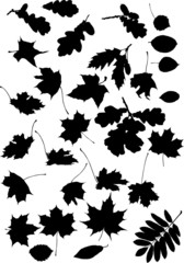 large set black leaves silhouettes isolated on white