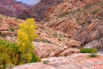 Grand Canyon Autumn Scenery