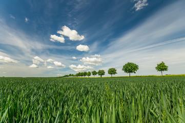 fototapeta aleja drzew na wiosennym polu