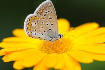 beautiful butterfly