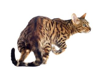 Buscar fotos animal print - Construcciones benjoal ...