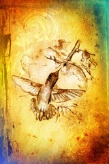 humming-bird drawing art