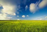 Fototapeta Beautiful green landscape