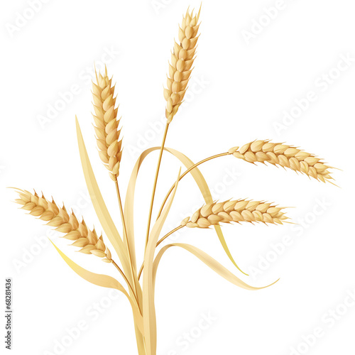 Wheat ears tuft - 68281436