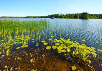 Lake summer view (Finland).