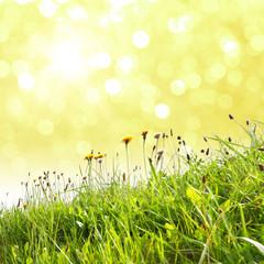 Gras mit Bokeh im Hintergrund