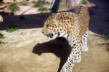다양한 야생동물