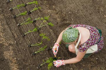 Persona nell'orto che trapianta le piantine