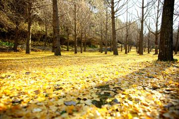 가을자연풍경
