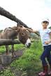 Little girl tenderly stroking a donkey.